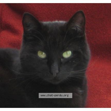 Envie den savoir plus sur la superstition du chat noir ?