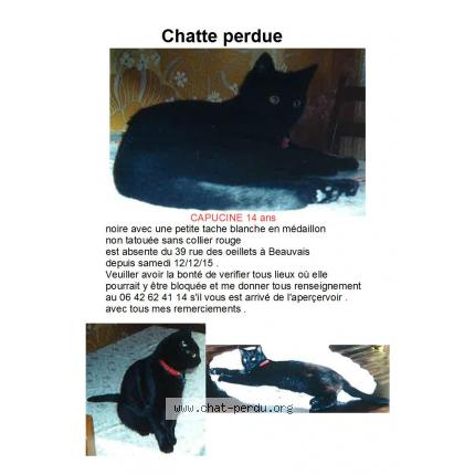 Tightes chatte