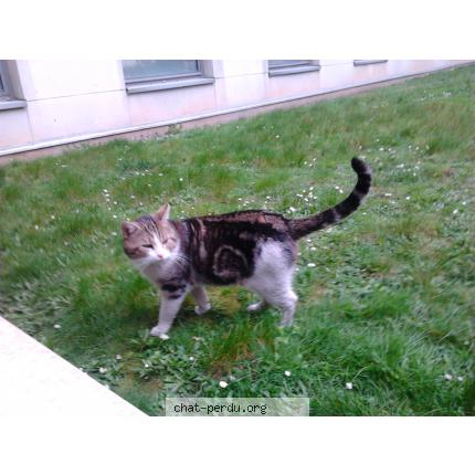 rencontre chats boulogne billancourt
