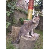 chat perdu cotes d armor sartrouville