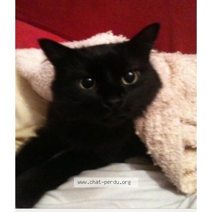 minuscule chatte noire