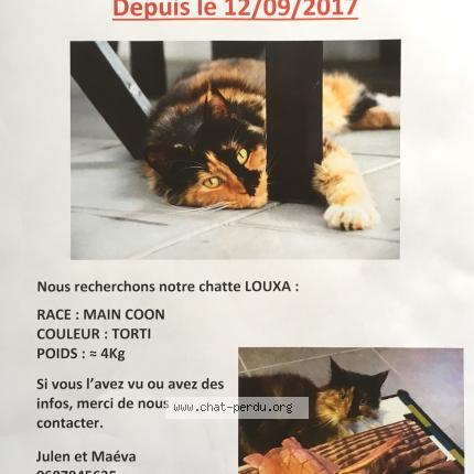 """Chat Perdu le 12/09/2017 - """"LOUXA"""""""