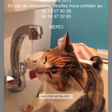 """Chat Perdu le 10/09/2017 - """"Charlie"""""""