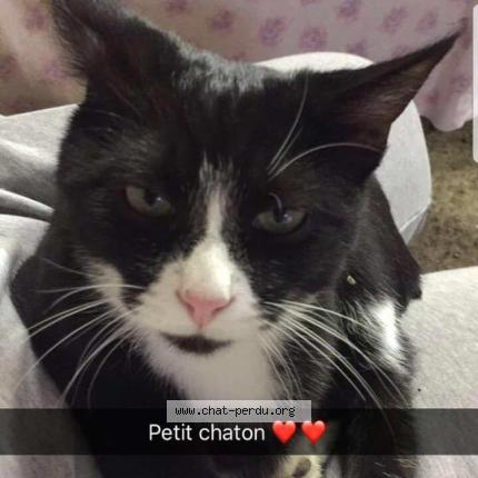 """Chat Perdu le 15/09/2017 - """"Nao"""""""