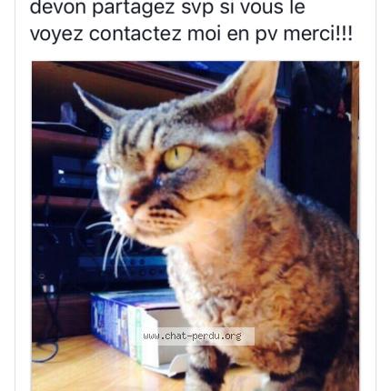 """Chat Perdu le 08/10/2017 - """"Mimo"""""""