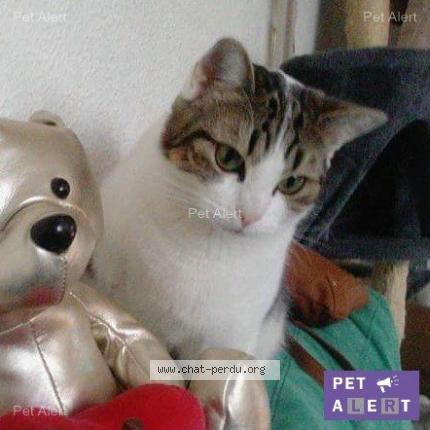 """Chat Perdu le 10/10/2017 - """"Elsa"""""""
