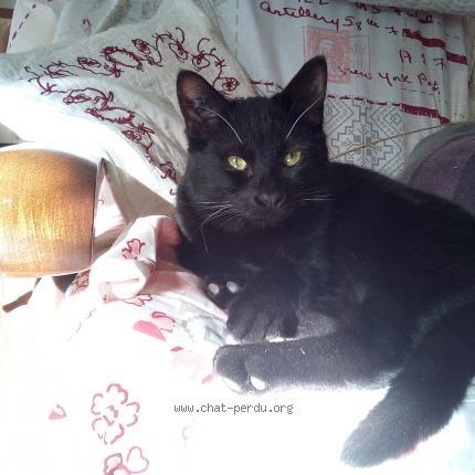 pure noir chatte pics vieux ébène lesbienne