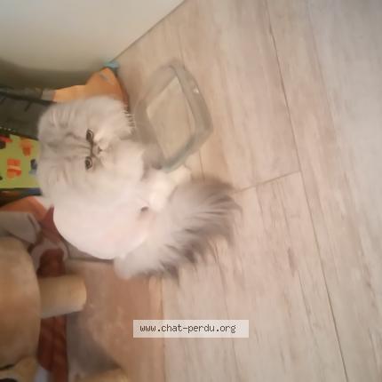 Svp je ne comprends pas lattitude de ma minette ce matin : elle était tranquillement allongée sur le canapé.