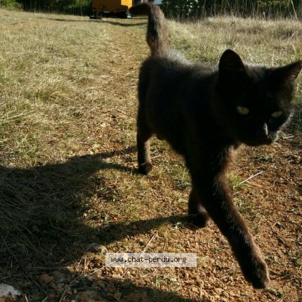 noir mamie chatte photo