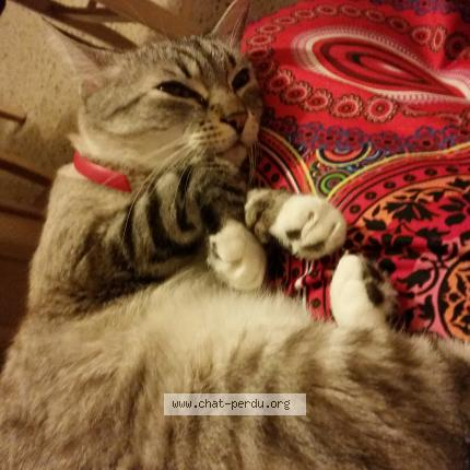 chat sex france aubagne