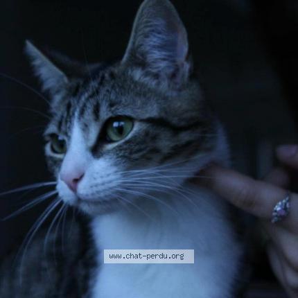 372117 mona chat perdu à herrlisheim - chat perdu france