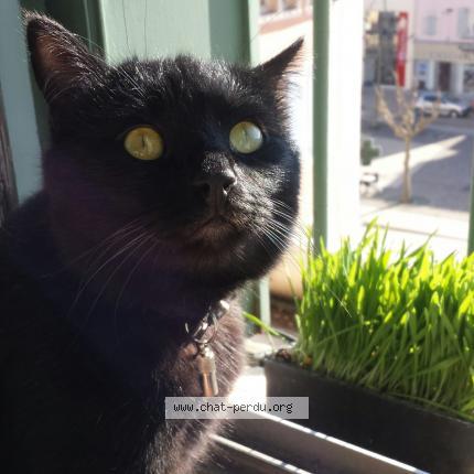 mince chatte noire japonais pleurer sexe