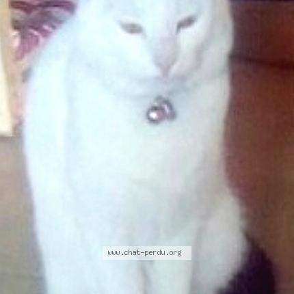 Queues noires et chattes blanches