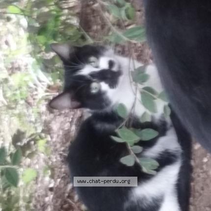Grosse bite noire dans la chatte
