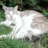 site chat perdu suisse wattrelos