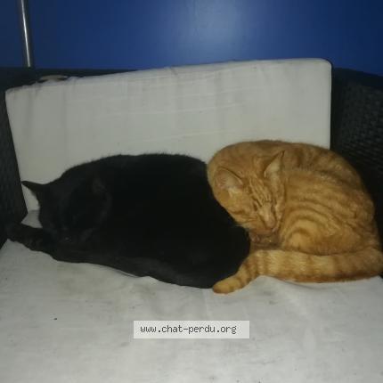 Fesses et chatte noires pour le plaisir.