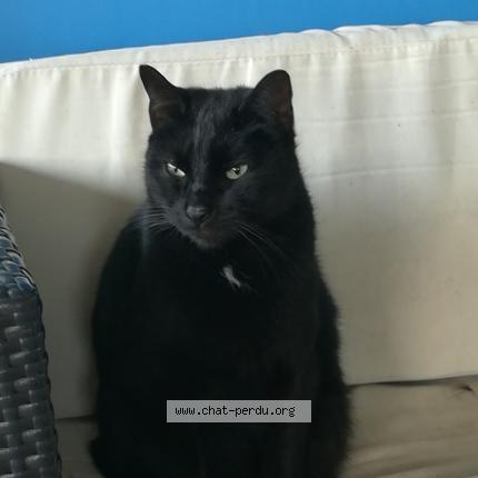 chatte noire de derrière