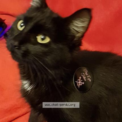 Chaud noir chatte pix