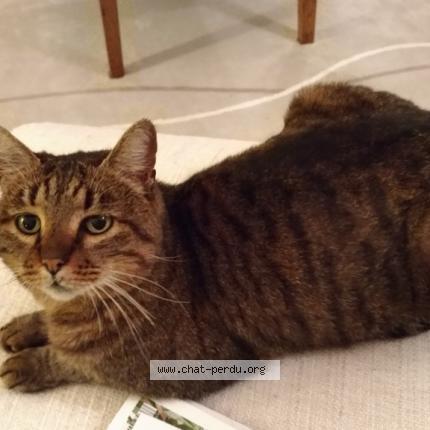 410812 chat trouvé à fondettes - chat perdu france