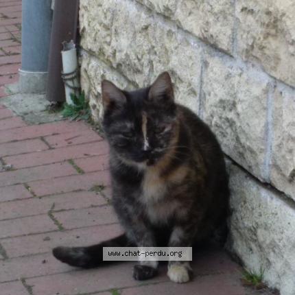 méchant noir chatte pic porno tensex