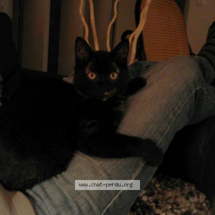 Page de chatte noire