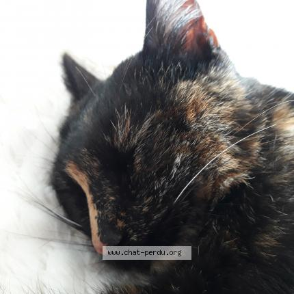 très sombre chatte pics sexe réel avec l'adolescence