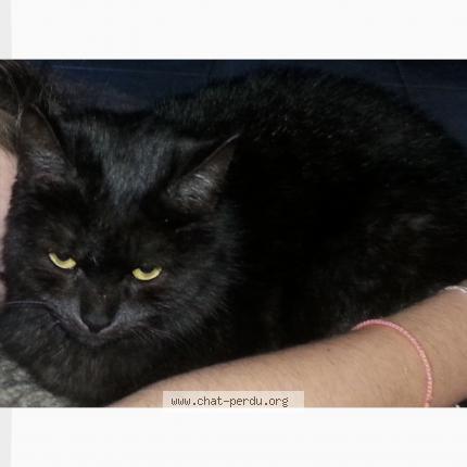 odeur de chatte noire