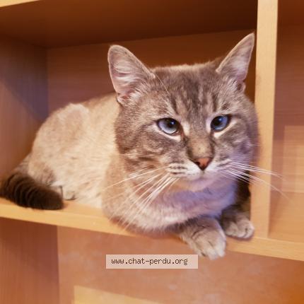 Cette blonde a une chatte très poilue et de magnifiques gros seins.