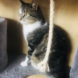 chat pour adultes belgique épinal