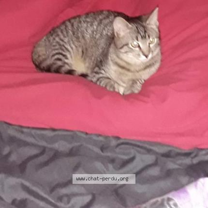 noir chatte lesBains