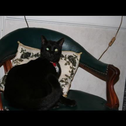 noir lesBains manger chatte Jayden Jaymes grosse bite