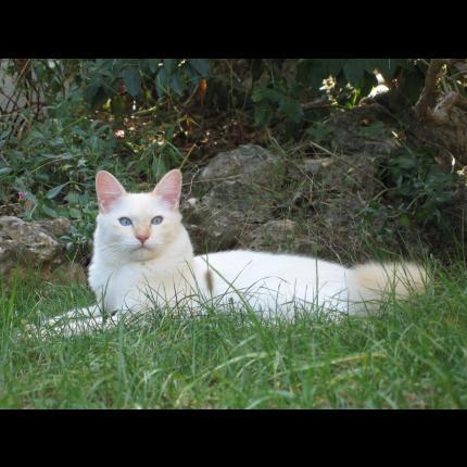 gros noir chatte seins